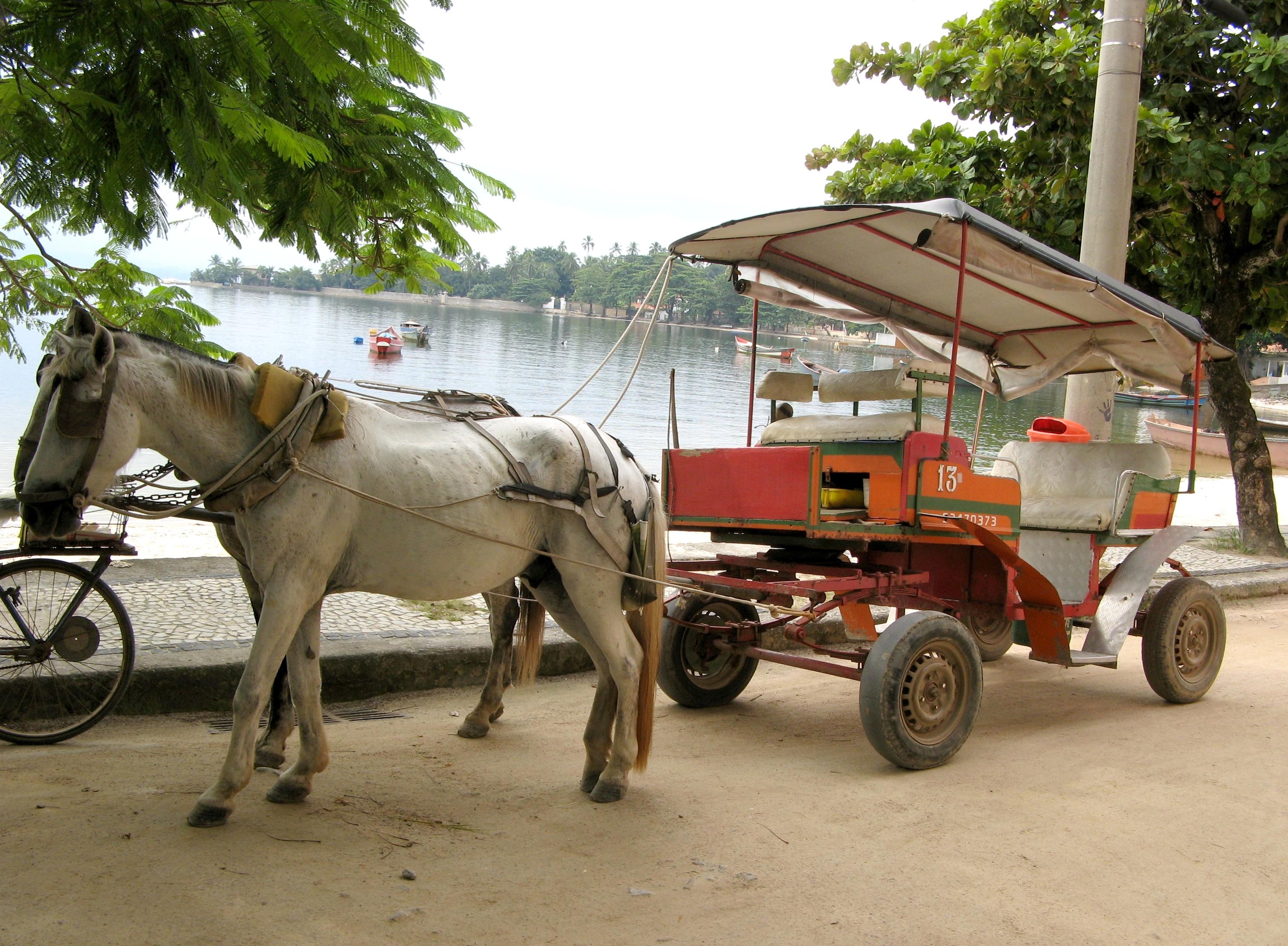 Aureo propôs que CPI maus tratos aos cavalos na Ilha de Paquetá