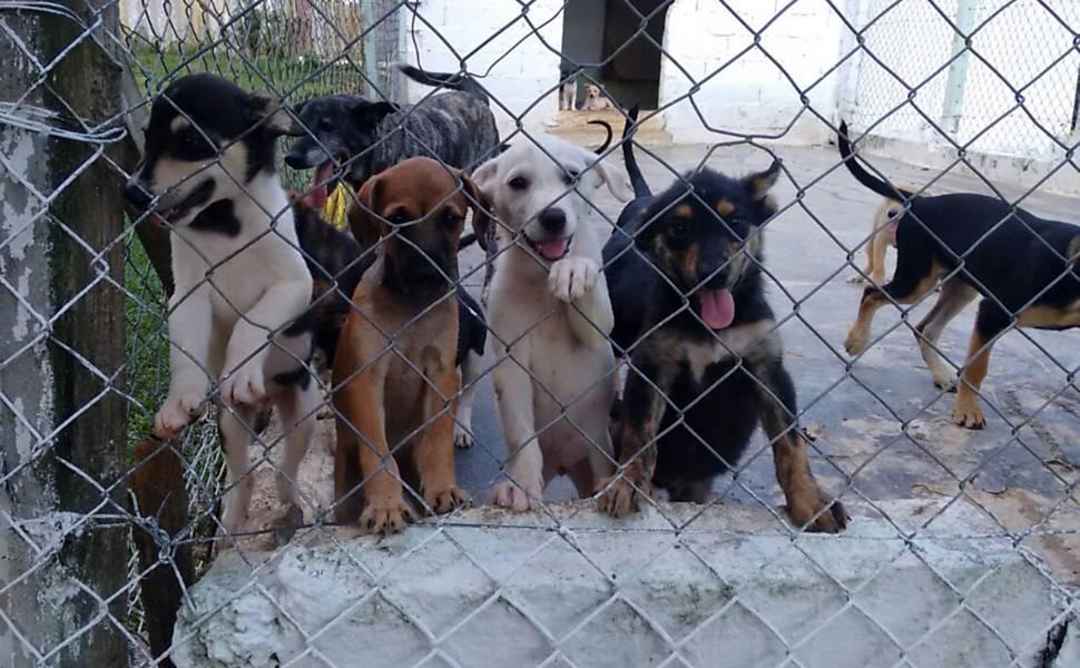 Deputado Aureo quer apoio a ONGS que cuidam de animais abandonados