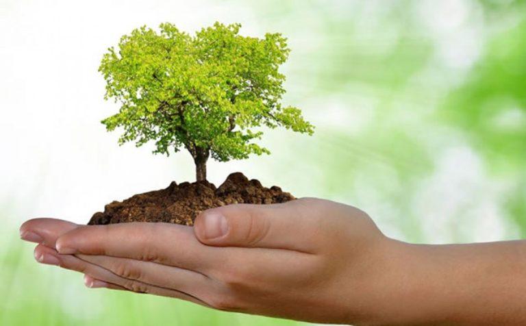 Read more about the article 05 de Junho – Dia Mundial do Meio Ambiente e da Ecologia