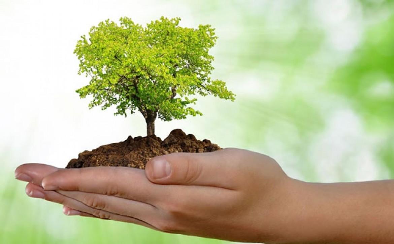 05 de Junho – Dia Mundial do Meio Ambiente e da Ecologia
